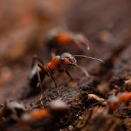 ants-on-dirt