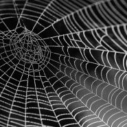 cobweb-with-dew
